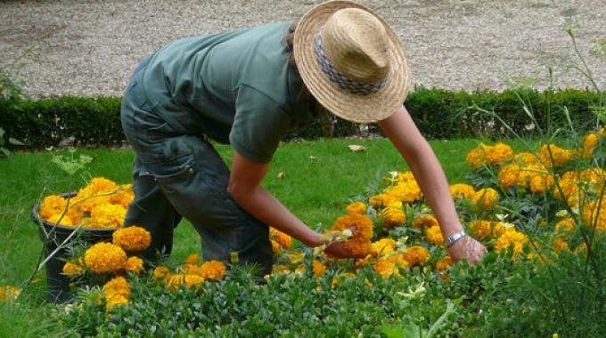 Combattere la depressione col giardinaggio
