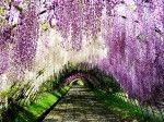 wisteriatunel.ispirazione libro