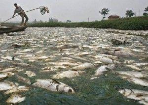 dead_fish_citarum-river