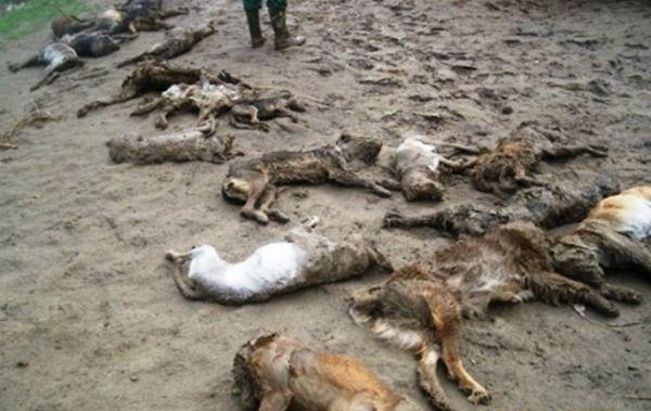 strage cani romania