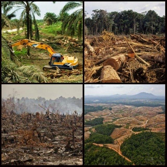 No all'olio di palma: ecco perché evitarlo