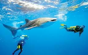 I Caraibi sono da sempre la casa dell'avventura e delle esperienze adrenaliniche.