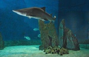 Porto Antico di Genova: La vasca degli squali all'Acquario di Genova