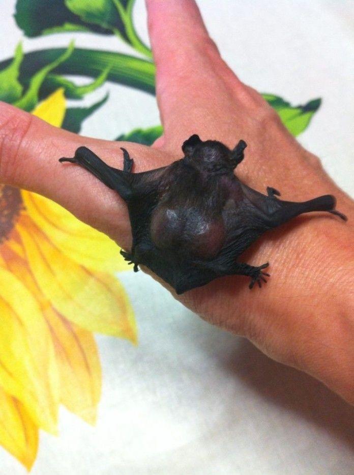 Bruce il pipistrello