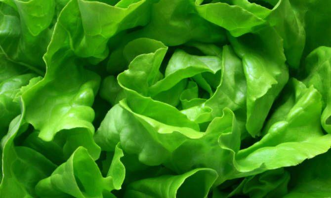 Curarsi con gli alimenti verdi: eccone qualcuno