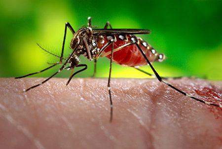 virus zika microcefalia feto