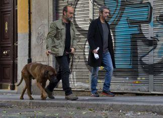 truman film cani animali spagna
