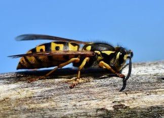 Punture insetti choc anafilattico