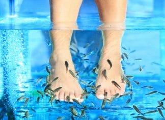 Pedicure vasca pesci