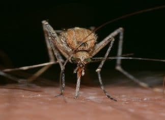Virus West NIle