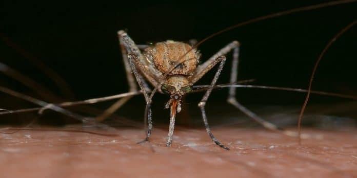 Virus West NIle