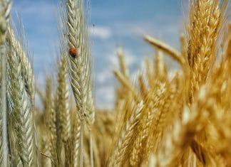 insetti agricoltura