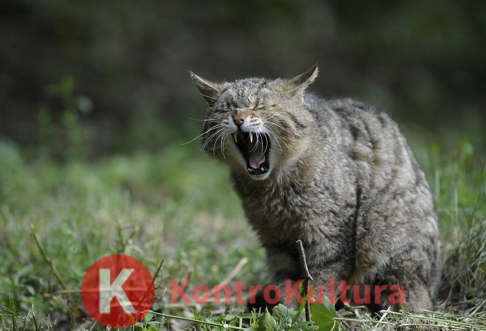 Muore Di Rabbia Per Il Morso Di Un Gatto 24 Ore Dopo