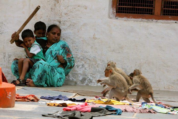 Scimmia uccide bambino