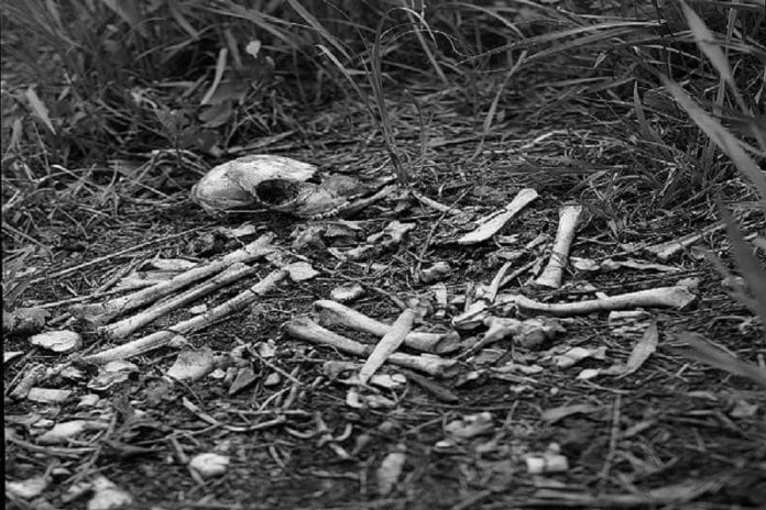 resti ossa necropoli