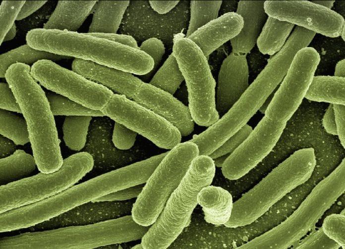 Batteri corpo umano