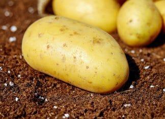 patate come mangiarle in tutta sicurezza