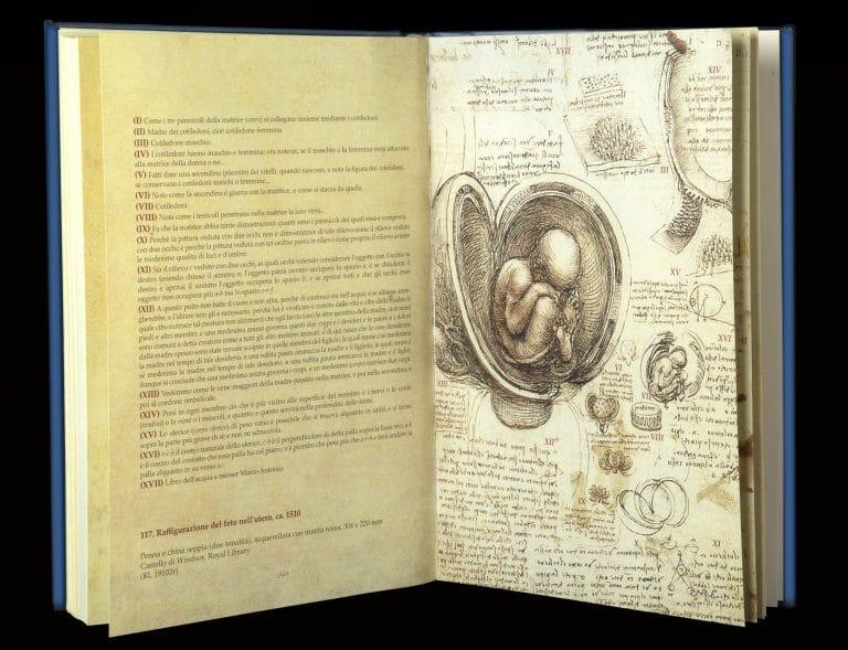 Leonardo da Vinci, i suoi disegni del corpo umano precisi come una Tac
