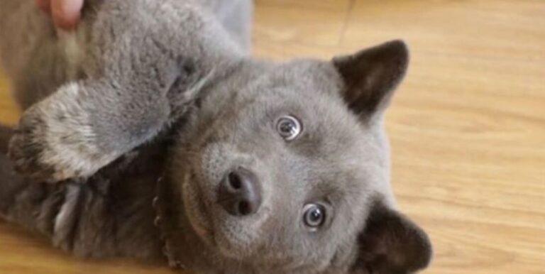 Cane somgiliante a gatto fa impazzire il web: ecco la sua storia