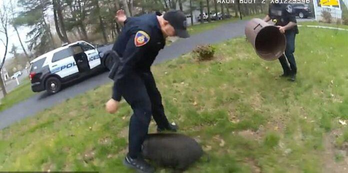 Maiale inseguito da poliziotti