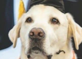 Dottorato ad un cane di servizio