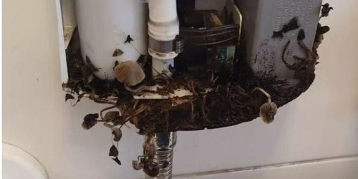 funghi in bagno