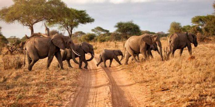 Strage di elefanti